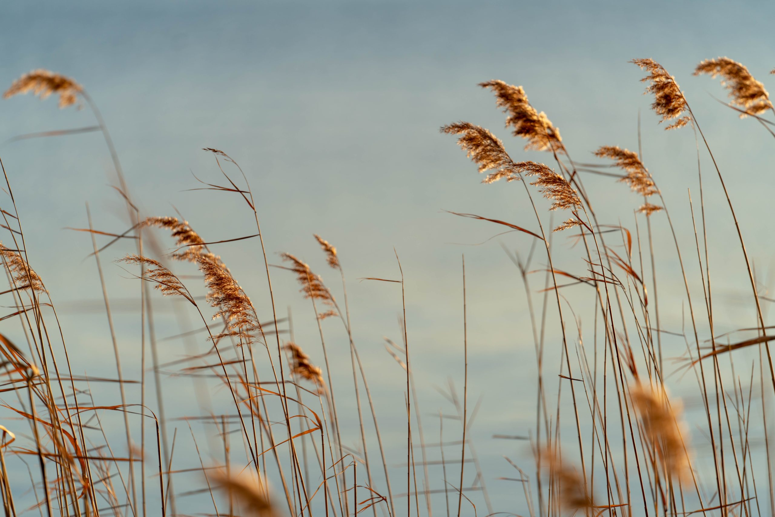 tall grasses under gray sky during daytime